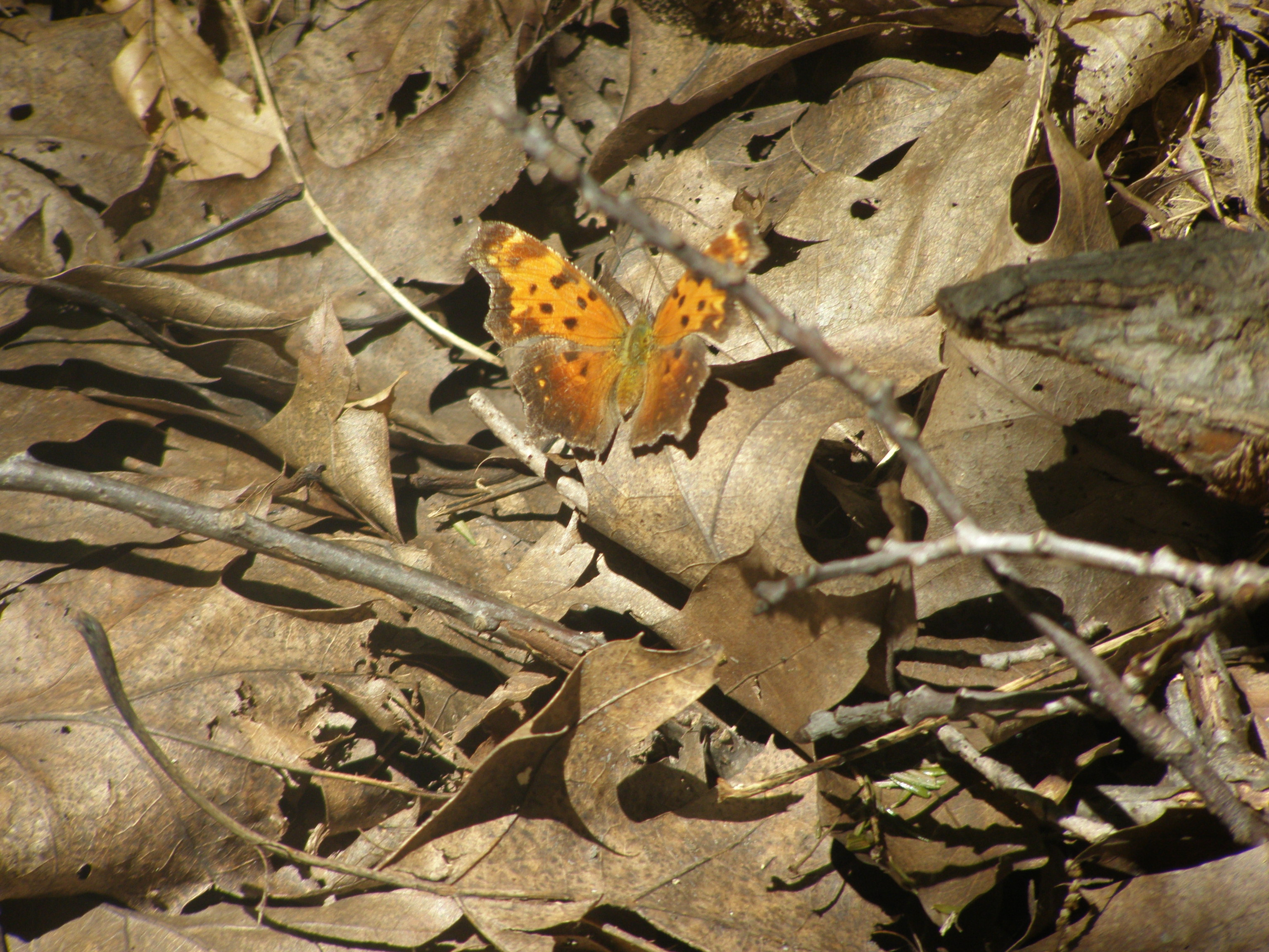 Butterfly Camouflage: A Labour of love