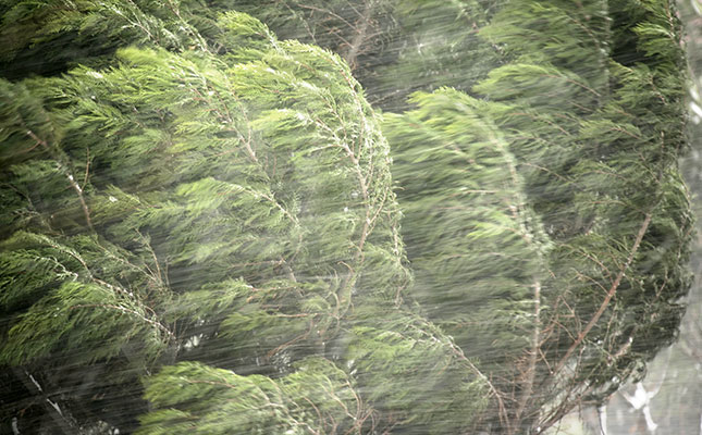Wind-Storm
